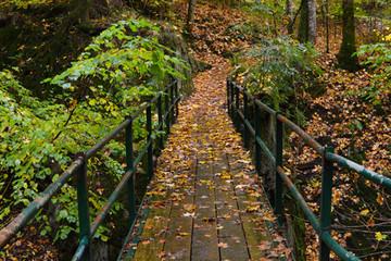 Bunte Wälder und alte Sprüche