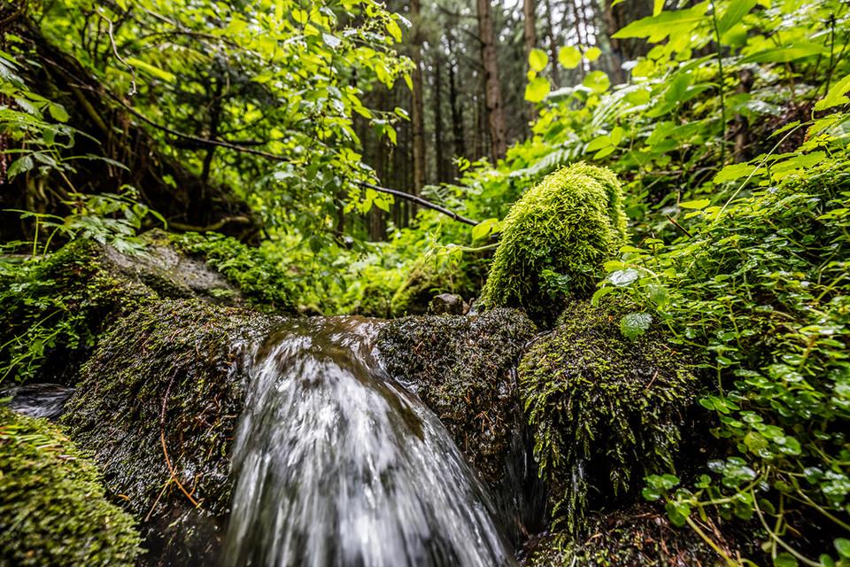 Der Bannwald am Zweribach