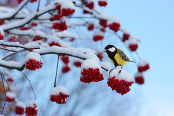 Wie Tiere und Menschen die kalte Jahreszeit überstehen