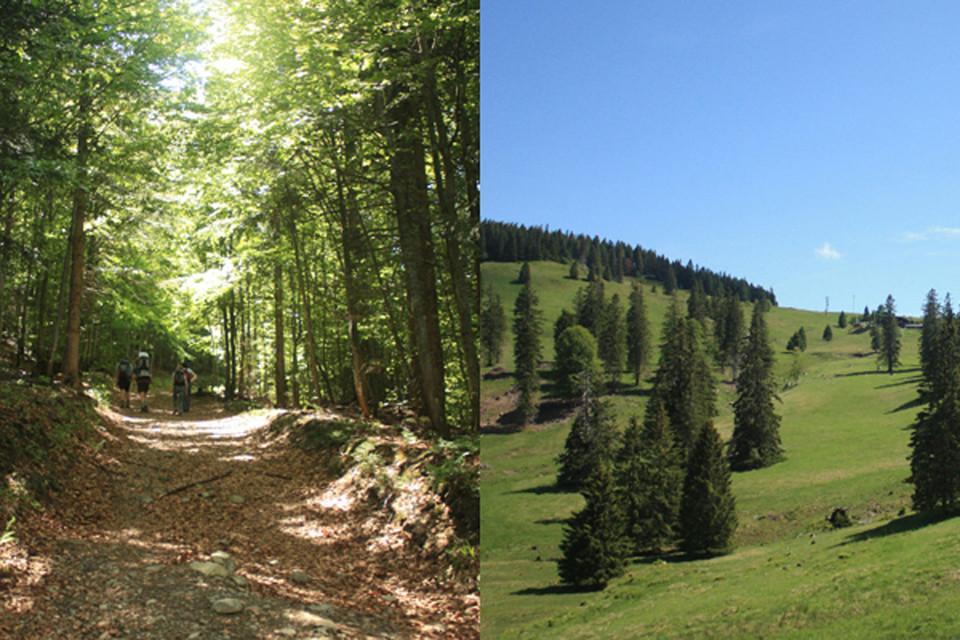 Endlich auf dem Krunkelbachsattel angekommen, der Gipfel ist jetzt nicht mehr weit.