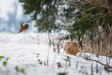 Schneeschuh-Abenteuer im Winterwald