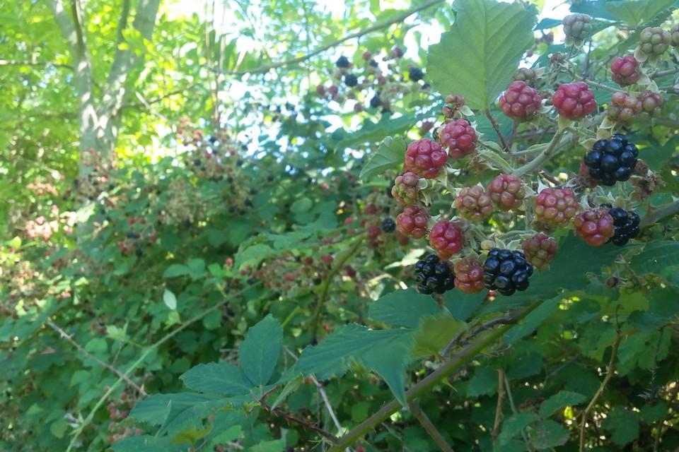 Der Wegrand ist die wichtigste Nahrungsquelle für die Tiere, wo sie Gräser und Beeren finden können.