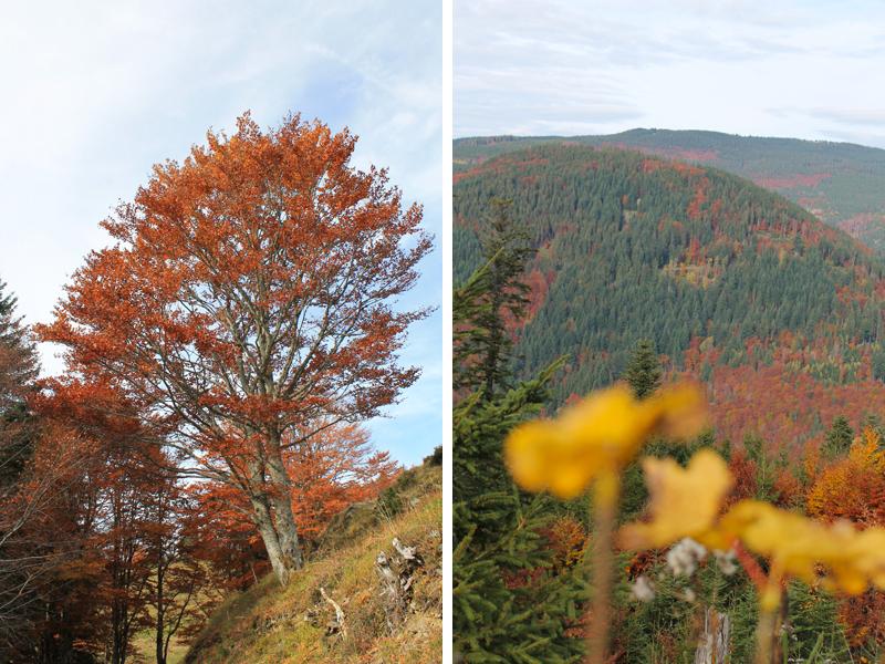 Der Herbst zeigt sich von seiner schönsten Seite.