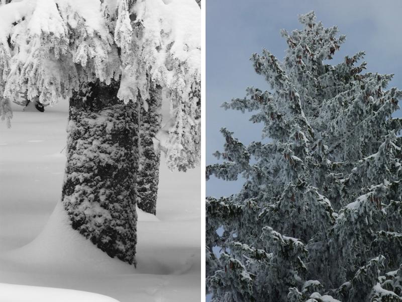 Es ist kaum zu glauben, wie viel es in den letzten Tagen geschneit hat.
