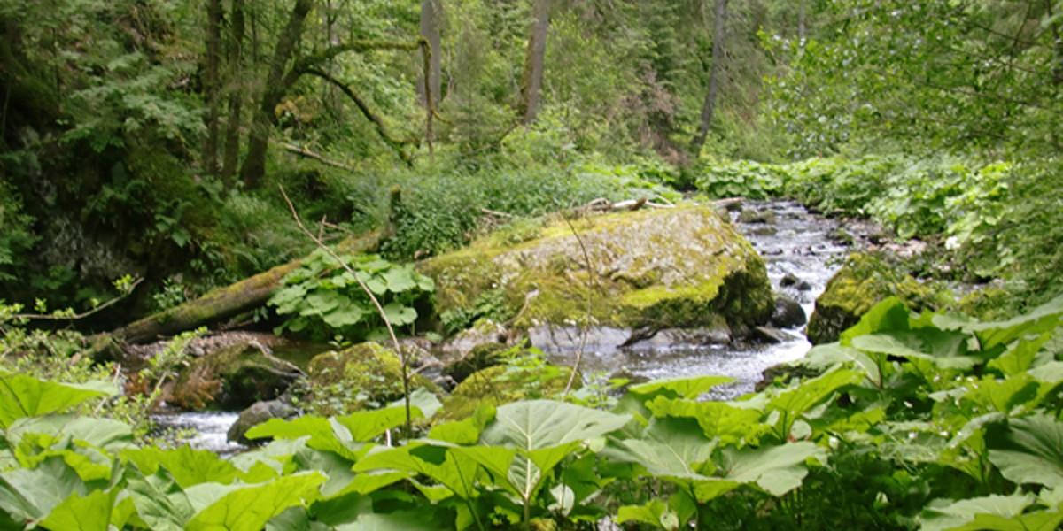 Mein erstes Mal seit der Kindheit, dass ich mich wieder in die wilden Schluchten des Hochschwarzwaldes wage.