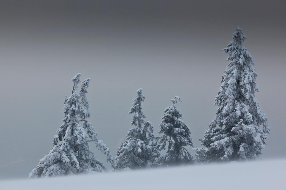 """""""Seltsam im Nebel zu wandern, kein Baum sieht den anderen"""", zitiere ich laut die Worte von Hermann Hesse."""