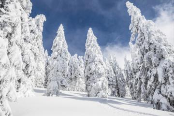 Warm im Winterwald
