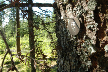 Friedenweiler: Die Ruheoase im Hochschwarzwald