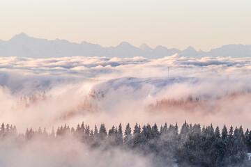 Die Schwarzwald-Fotografen