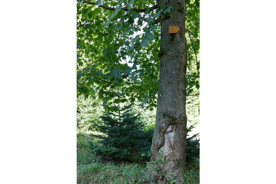 Der Baum hört, schmeckt, fühlt und muss daher auch ein Bewusstsein haben.